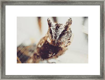 Closeup Portrait Of A Young Owl Looking At The Camera Framed Print