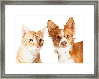 Closeup Small Dog And Tabby Cat Framed Print by Susan Schmitz