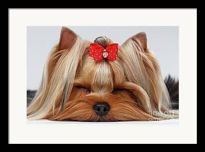 Show Dog Framed Prints