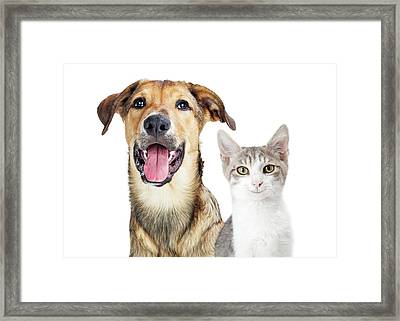 Closeup Young Attentive Gey Cat Framed Print by Susan Schmitz