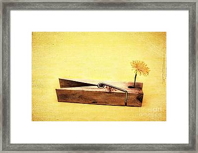 Clothespins And Dandelions Framed Print by Jorgo Photography - Wall Art Gallery