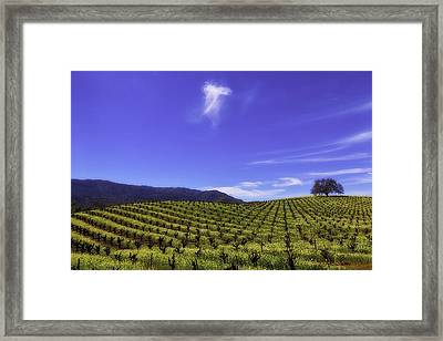 Cloud Above The Vineyards Framed Print by Garry Gay