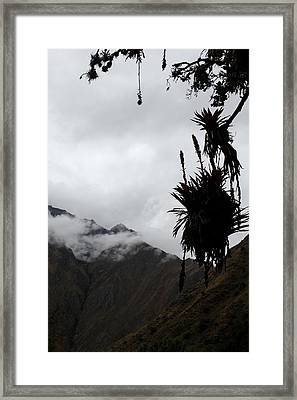 Cloud Forest Musings Framed Print