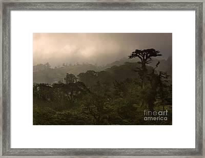 Cloud Forest Sunset Framed Print by Matt Tilghman