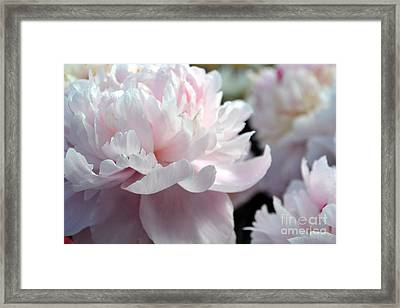 Cloud Of Peonies-47 Framed Print