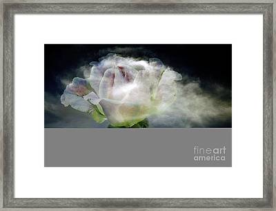 Cloud Rose Framed Print