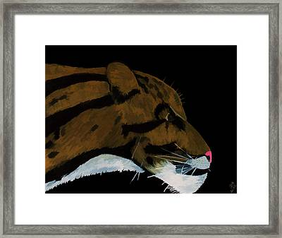 Clouded Leopard Framed Print by D Hackett