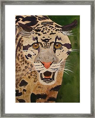 Clouded Leopard Framed Print