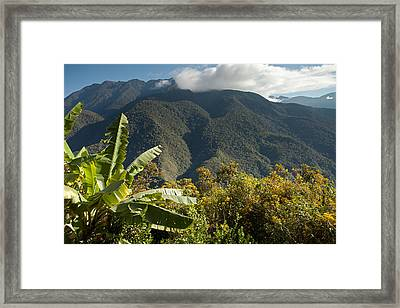 Cloudforest View With Banana Tree Framed Print