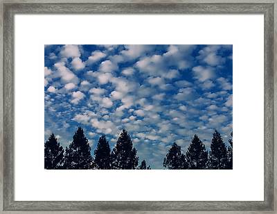 Clouds Above The Tree Line Framed Print