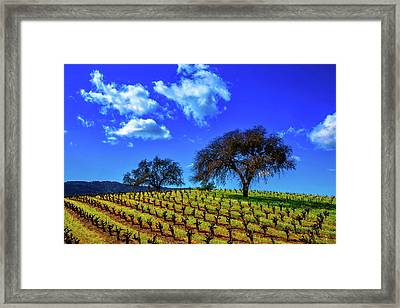Clouds Above Vinyards Framed Print by Garry Gay