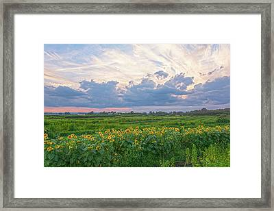 Clouds And Sunflowers Framed Print by Angelo Marcialis