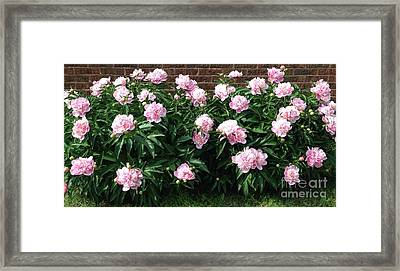 Clouds Of Peony Framed Print