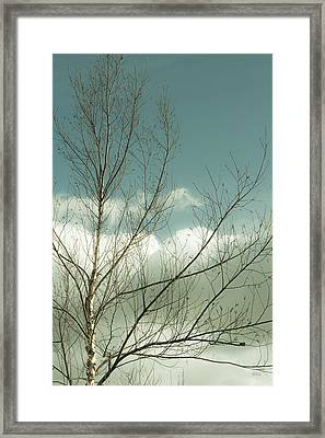 Framed Print featuring the photograph Cloudy Blue Sky Through Tree Top No 1 by Ben and Raisa Gertsberg