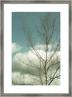 Framed Print featuring the photograph Cloudy Blue Sky Through Tree Top No 2 by Ben and Raisa Gertsberg