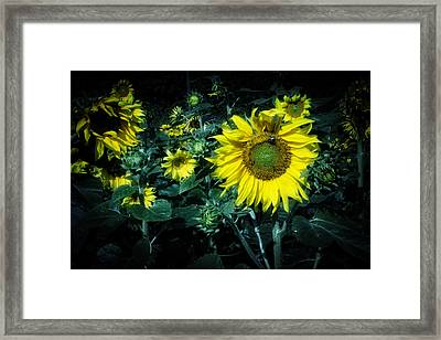Cloudy Day In A Sunflower Field Framed Print by Greg Mimbs