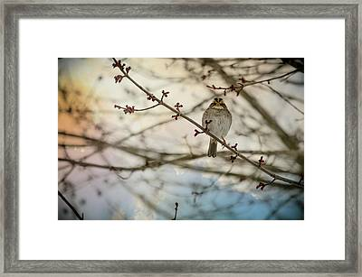 Framed Print featuring the photograph Cloudy Finch by Trish Tritz