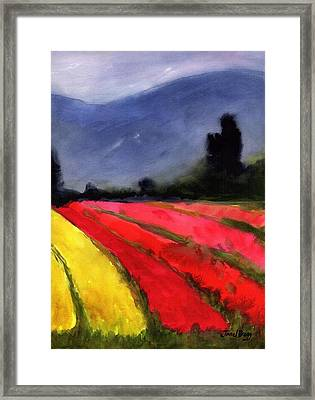 Cloudy Skagit Tulip Fields Framed Print
