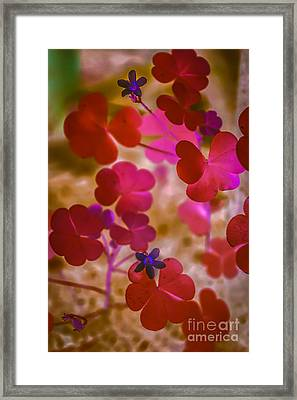 Clover - Abstract Framed Print