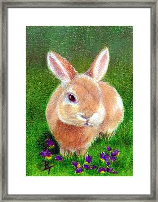 Clover Aceo Framed Print by Brenda Thour