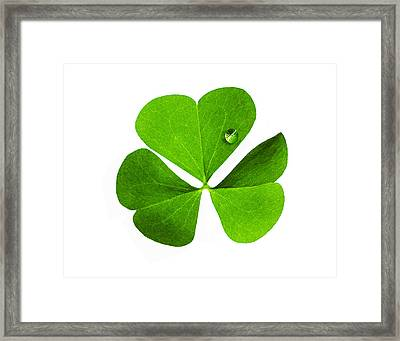 Framed Print featuring the photograph Clover And Water Droplet by Roger Bester
