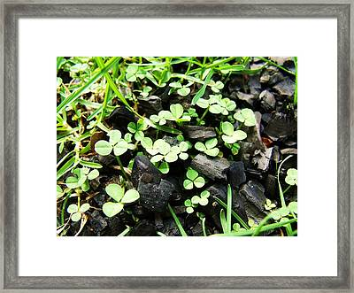 Clover Framed Print by Anna Villarreal Garbis