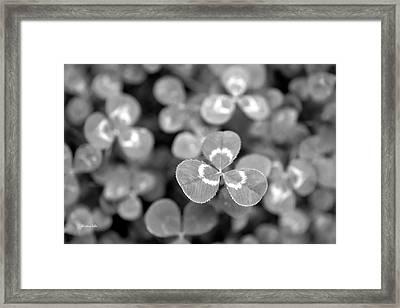 Clover Black And White Framed Print by Christina Rollo