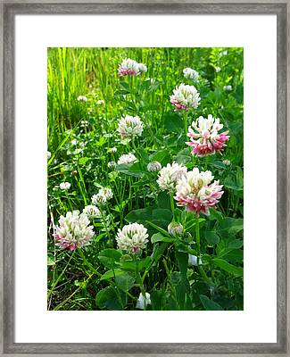 Clover Field Framed Print by Anna Villarreal Garbis