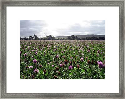 Clover Field Wiltshire England Framed Print by Kurt Van Wagner