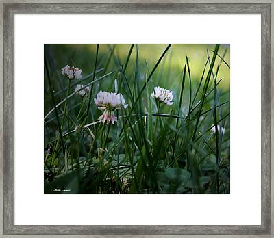 Clover Framed Print by Mikki Cucuzzo