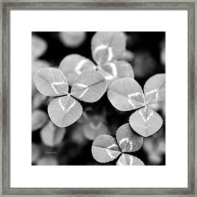 Clover Square Framed Print by Christina Rollo