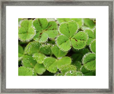 Cloverland Frosted Over Framed Print