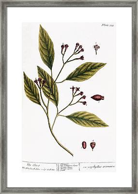 Cloves, 1735 Framed Print by Granger