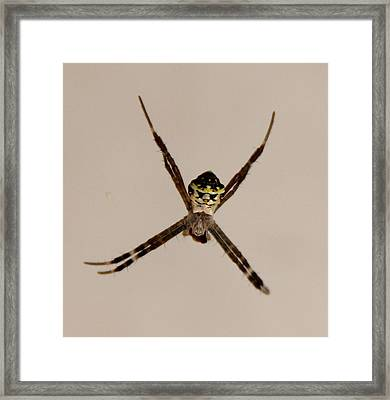 Clown Framed Print by Andrew Wijesuriya