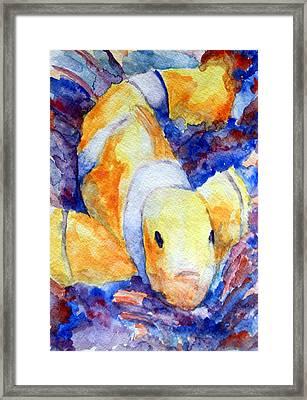 Clown Fish Framed Print by Mike Segura