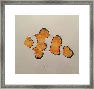 Clown Fish Framed Print