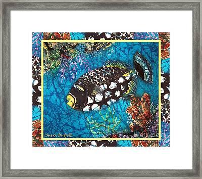 Clown Triggerfish-bordered Framed Print by Sue Duda