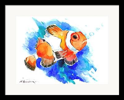 Clownfish Framed Prints