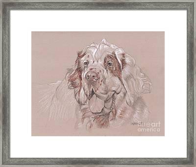 Clumber Spaniel - Big Framed Print