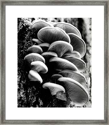 Clumps Framed Print