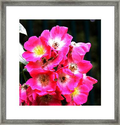 Cluster Framed Print by Gerald Mitchell
