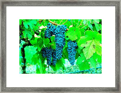 Cluster Of Wine Grapes Framed Print by Jeff Swan