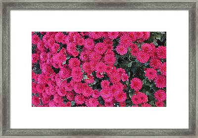 Cluster Red  Framed Print by Peggy Chambers