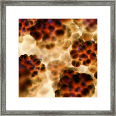 Clusters In Red 1 Framed Print