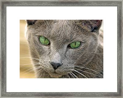 Clyde And His Green Eyes Framed Print by James Steele