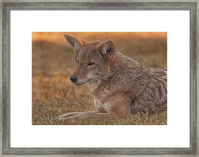 Clyde  Framed Print by Brian Cross