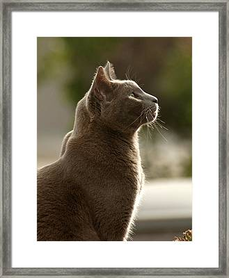Clydes Profile Framed Print by James Steele