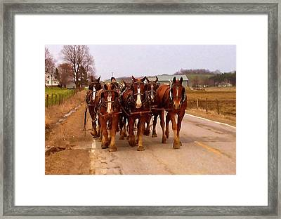 Clydesdale Amish Plow Team Framed Print