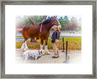 Clydesdale With Handler And His Companion Framed Print