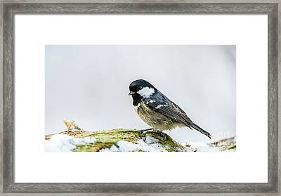 Framed Print featuring the photograph Coal Tit's Profile by Torbjorn Swenelius